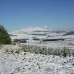 Glenlivet in winter